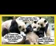 Részeg panda