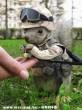 Kommandós mókus