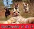 Akciókandúr :)