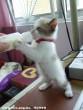 Részeges cica