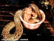 Szép tiszta kígyó legyél!
