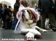 Lady Big-Dog