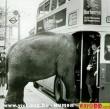 Elefánt a buszon