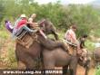 Basznak az elefántok!
