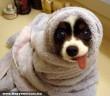Attól fél a gazdim, hogy megfázok