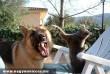 Egy bátor cica