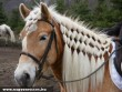 Ló kozmetika