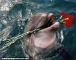 MSZP-és delfin
