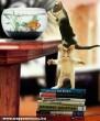 Leleményes macskák