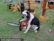Favágó kutya