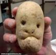 Krumpli fej