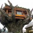 Ház a fa tetején