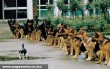 Bátor macska