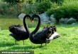 Szép a szerelem