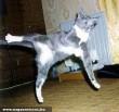 Karate cica