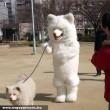 Kutya sétáltat