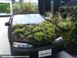 A természetvédõk autója