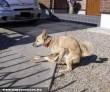 Jupiter kutya + egy kacsa = animal sex