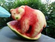 Dinnye jegesmedve
