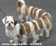 100 lábú kutya