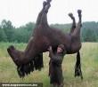 Hívtam a lovat, de nem jött