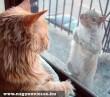 Pózolj macskával :D