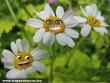 Tavaszi emberevõ virágok :D