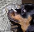 Hamster & Dog - funny