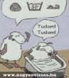 Figyelmetlen bárány