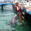 Kíváncsi delfin