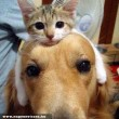 Kutyabarát Cica :)