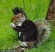 Punk mókus