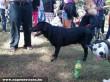 Pózoló kutya