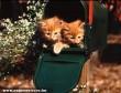 Pajkos cicák