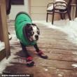 Csúszkáló kutyus
