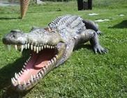 Krokodil a házibuliban