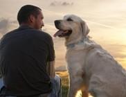 Kutya vs. férfi