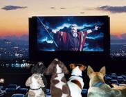 Kutya a moziban